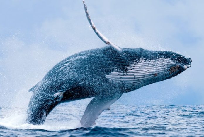 Market Outlook: Crypto Whale Tales and China's Blockchain Hype